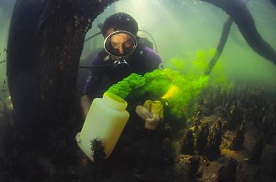 Underwater Breathing Photograph - Underwater Research by Alexis Rosenfeld