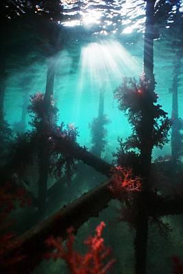 Wood Pylons Photograph - Underwater Scenery by Georgette Douwma
