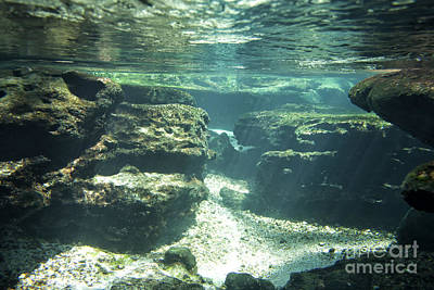 Underwater Stream In Central Florida Art Print by Christopher Purcell