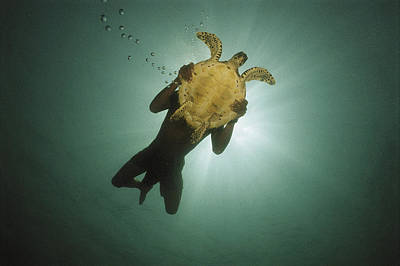 Green Sea Turtle Photograph - Underwater View Of Swimmer And Turtle by Nicolas Reynard