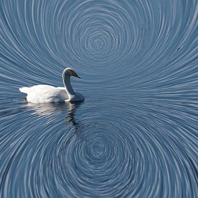 Jouko Lehto Royalty-Free and Rights-Managed Images - Universal Swan by Jouko Lehto