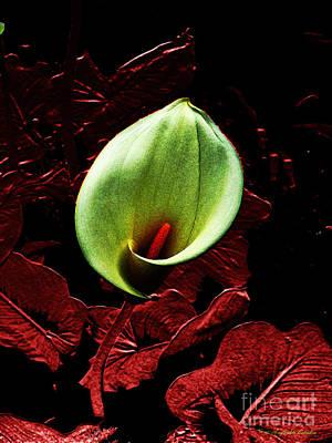 Photograph - Untitled Cally Lily by Afroditi Katsikis