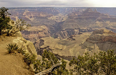 South Kaibab Photograph - Untitled by David Edwards