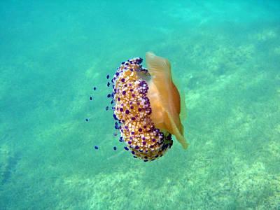 Unwelcome Jellyfish Print by Rod Johnson