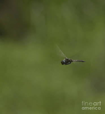 Photograph - Up Close Dragonfly by Donna Brown