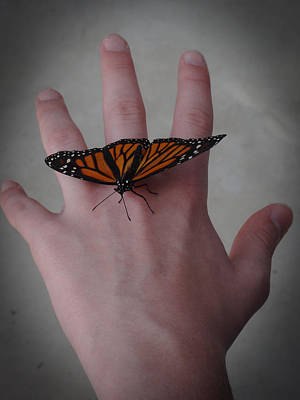 Photograph - Upon My Hand by Julia Wilcox