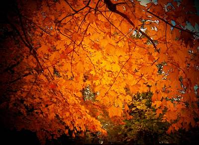 Upperville Photograph - Upperville Leaves by Joyce Kimble Smith