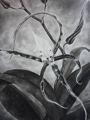 Drawing - Upside-down Orchid by Estephy Sabin Figueroa