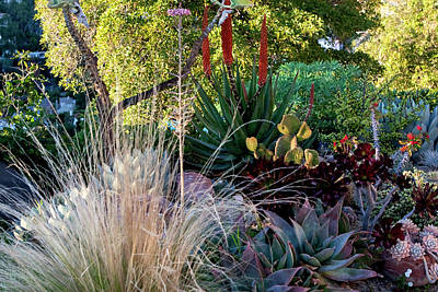 Photograph - Urban Garden With Cactus by Lorraine Devon Wilke