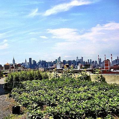 Skylines Photograph - Urban Nature - New York City by Vivienne Gucwa
