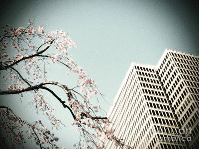 Photograph - Urban Spring by Eena Bo