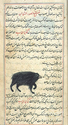 Ursa Minor, 17th Century Art Print
