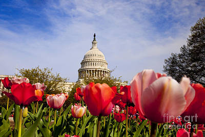 Photograph - Us Capitol by Brian Jannsen