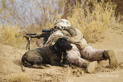U.s. Marine And A Military Working Dog Art Print by Stocktrek Images