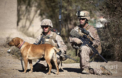 Infantryman Photograph - U.s. Marines And A Military Working Dog by Stocktrek Images