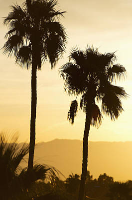 Y120907 Photograph - Usa, California, Palm Springs, Palm Trees Silhouetted At Sunset by Tetra Images