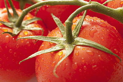 Y120907 Photograph - Usa, Utah, Lehi, Fresh Tomatoes With Water Drops by Mike Kemp