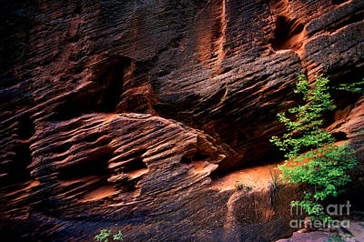 Photograph - Utah - Rock Face 2 by Terry Elniski