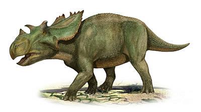 Utahceratops Gettyi, A Prehistoric Era Print by Sergey Krasovskiy