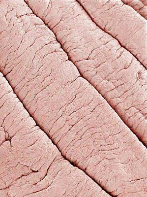 Vaginal Lining, Sem Art Print
