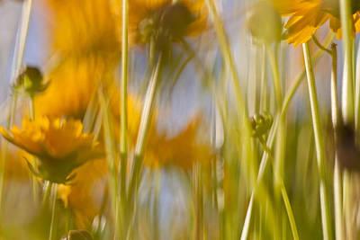 Van Gogh Remembered Art Print by Graham Hughes