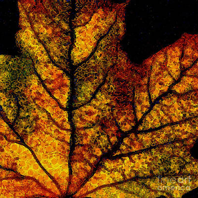 Photograph - Vangogh's Autumn Maple Leaf - Square by Wingsdomain Art and Photography