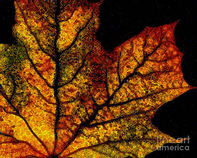 Photograph - Vangogh's Autumn Maple Leaf by Wingsdomain Art and Photography