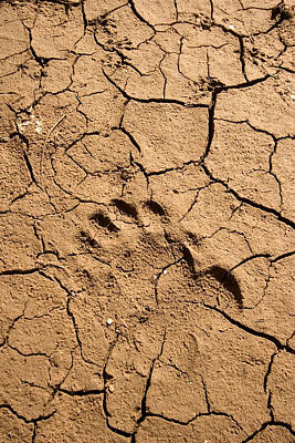 Dry Lake Photograph - Various Footprints In Cracked Mud by Phil Schermeister