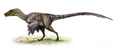Velociraptor Digital Art - Velociraptor Mongoliensis by Sergey Krasovskiy