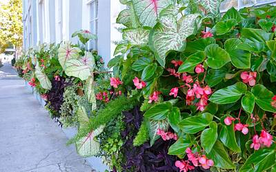 Photograph - Vendue Street Window Boxes by Lori Kesten