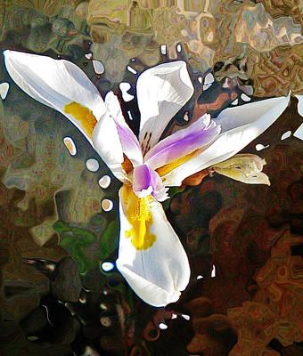 Photograph - Venice Iris by Daniele Smith