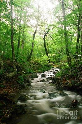 Photograph - Verdant Waters by Frank Townsley
