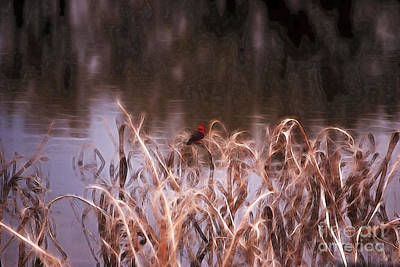 Photograph - Vermillion Flycatcher by Donna Greene