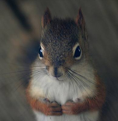 Photograph - Vermont Squirrel by Louise Mingua