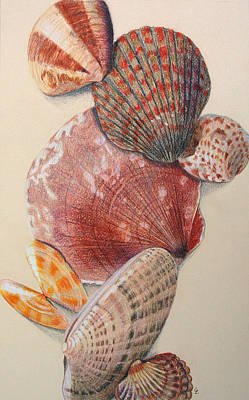 Vertical Clam Shells Art Print by Glenda Zuckerman