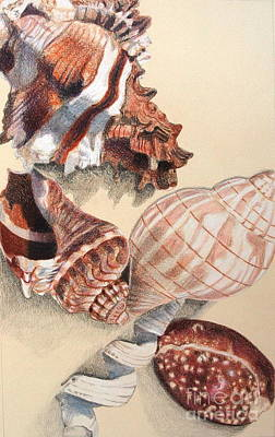 Still Life Drawings - Vertical Conch Shells by Glenda Zuckerman