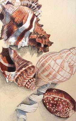 Vertical Conch Shells Art Print by Glenda Zuckerman