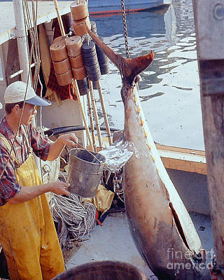 Photograph - Very Large Tuna Gloucester Ma by Merton Allen