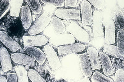 Vesicular Stomatitis Virus, Tem Art Print