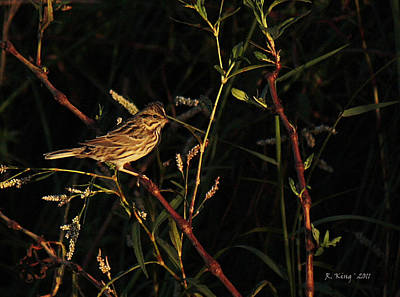 Photograph - Vesper Sparrow On A Twig by Roena King