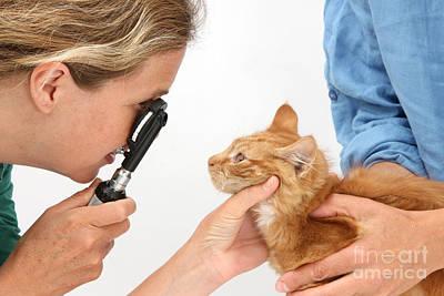 Pet Care Photograph - Vet Examining Kitten by Mark Taylor