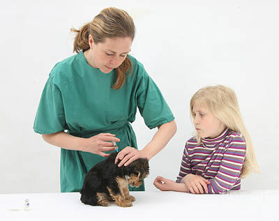 Pet Care Photograph - Vet Giving Pup Its Primary Vaccination by Mark Taylor
