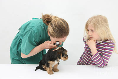 Pet Care Photograph - Vet Using An Otoscope To Examine A Pups by Mark Taylor