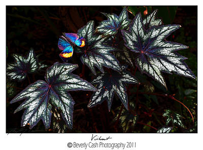 Photograph - Vibrant by Beverly Cash