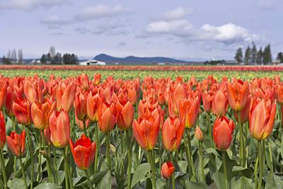 Photograph - Vibrant Orange Spring by Priya Ghose