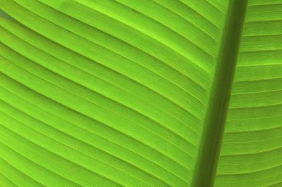 Photograph - Vibrant Palm Lines by Joe Carini - Printscapes