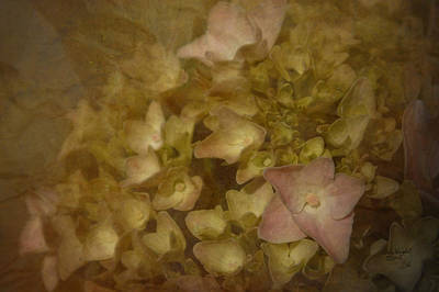 Photograph - Victorian Hydrangea by Cindy Wright