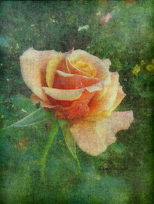 Photograph - Victorian Peach Rose by Cindy Wright
