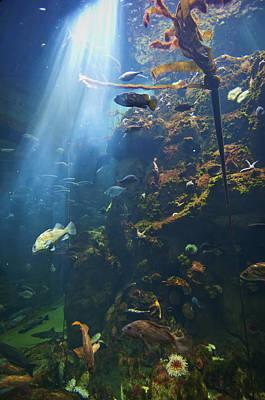 View Of Fish In An Aquarium In The San Art Print