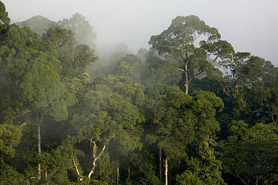 Danum Valley Conservation Area Photograph - View Of Lowland Rain Forest In Borneo by Tim Laman
